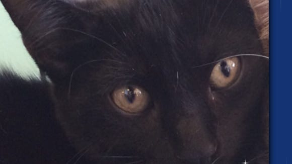 Loki is looking for his purr-fect  forever home.