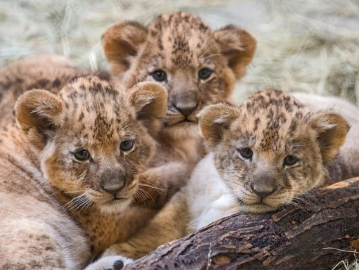 Baby Zoo Animals New Additions To Spot During Winter 2016
