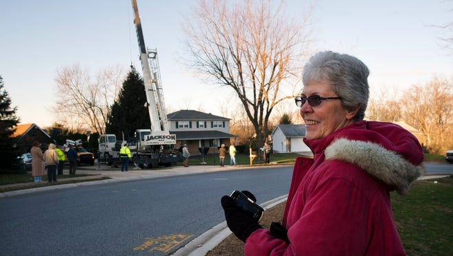Sally Fringer watches as the York Christmas tree is removed from her yard in New Salem, bound for Continental Square. Sally and her husband, Earl, donated the 30-foot blue spruce to the city.