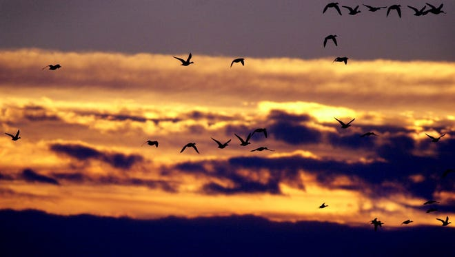 Ducks at dawn in the Klamath Basin National Wildlife Refuge.