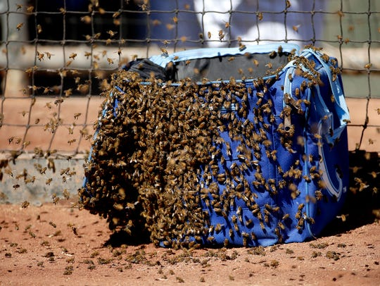 Bees swarm on a bag near the Kansas City Royals' dugout