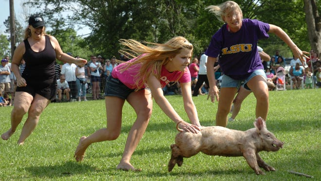 A contest in which participants try to catch a  greased pig will be among the events at the Cochon de Lait Festival in Mansura.