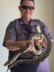 Appleton residents could keep snakes up to 6-feet long as pets, under a new proposal from an alderman.
