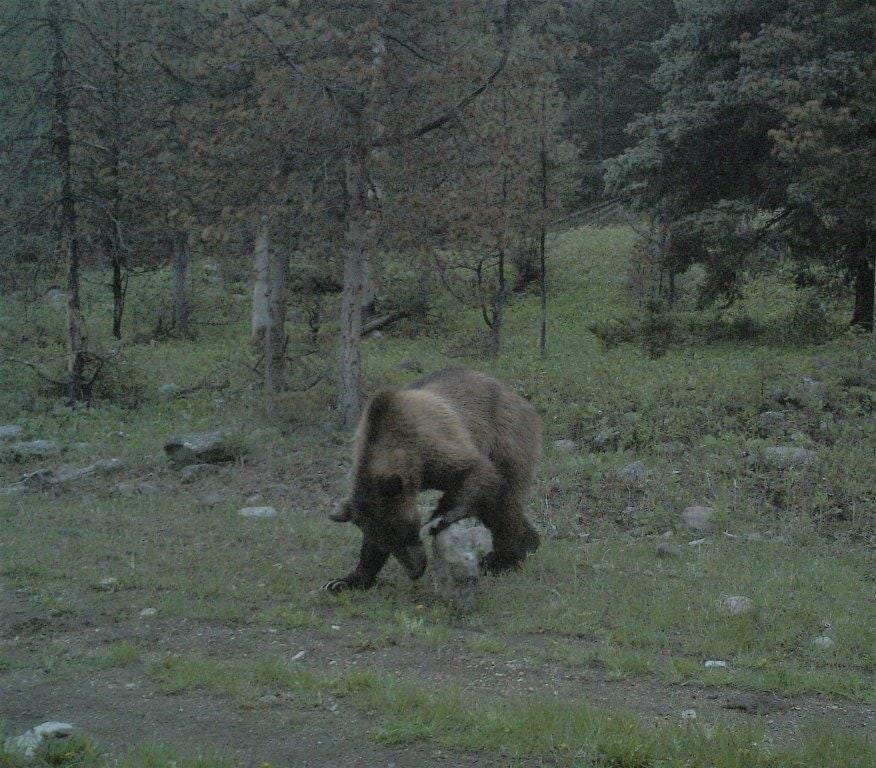 Hunter, who was pulled out of the paws of a grizzly