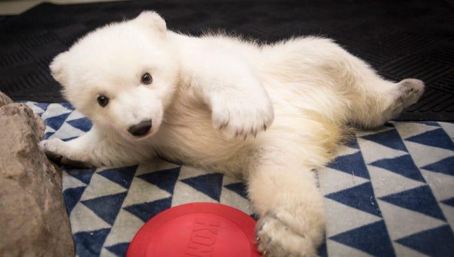 An adorable 3-month-old polar bear born at the Columbus Zoo and Aquarium in Ohio finally has a name. Meet, Nora.