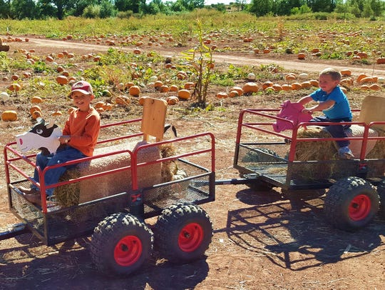 There is fun for all ages at the Willis Farm autumn