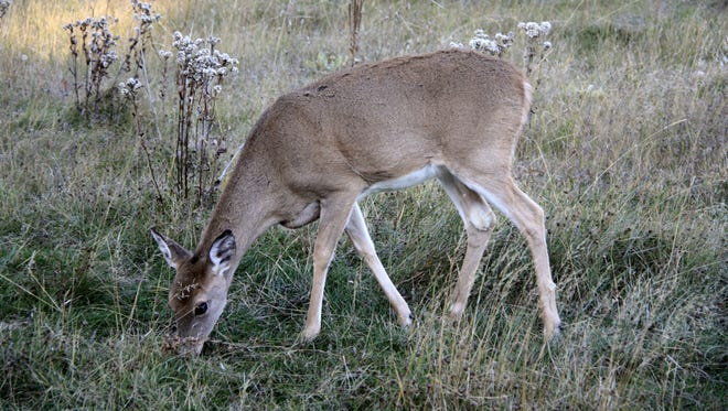 Although the whitetail season is winding down, some late season hunters are still gearing up.