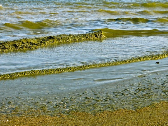 Green algae rolls onto Algoma's Crescent Beach. The Ahnapee River, which was listed for excess phosphorus in 2014 flows into Lake Michigan just north of the beach.