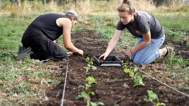 Mikhail Grigoryev, 20, left, and Nicole Barbuch, 15, work in the Marion-Polk Food Share Youth Farm on Aug. 14.