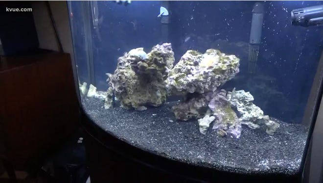 A Texas woman accidentally released a neurotoxin while cleaning a coral in her saltwater aquarium which made her family sick.