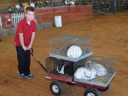 Chance Bordelon is showing rabbits and chickens in the 4-H Show at the Rapides Parish Fair.