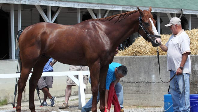 Kentucky Derby and Preakness winner Justify is washed down by his grooms after arriving back to Churchill Downs in Louisville, Kentucky.      May 20, 2018