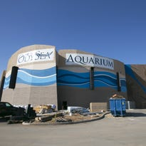 OdySea Aquarium near Scottsdale