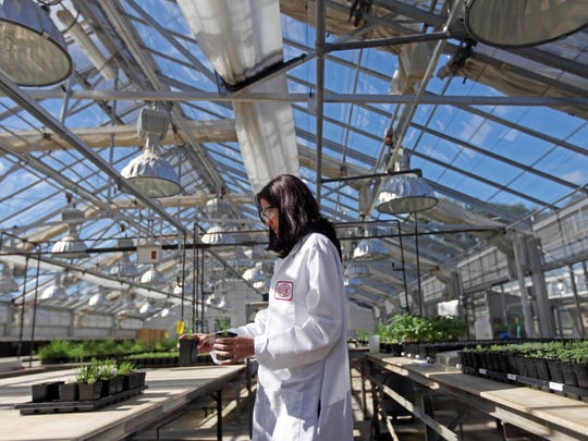 Research scientist Aman Chandi prepares plants for a herbicide test at DuPont Stine-Haskell Research Center on Sept. 23, 2013. A proxy battle has raised concerns about changes to DuPont research and development operations.