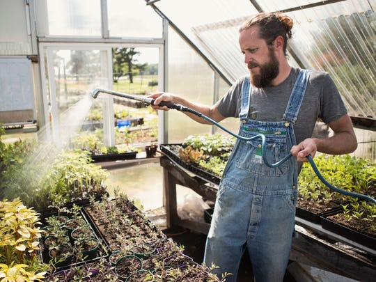 Duck Duck Beet chef Jared Wilkinson waters vegetables in the greenhouse area at Foxhollow Farm. May 24 2016