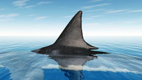 Shark fin.