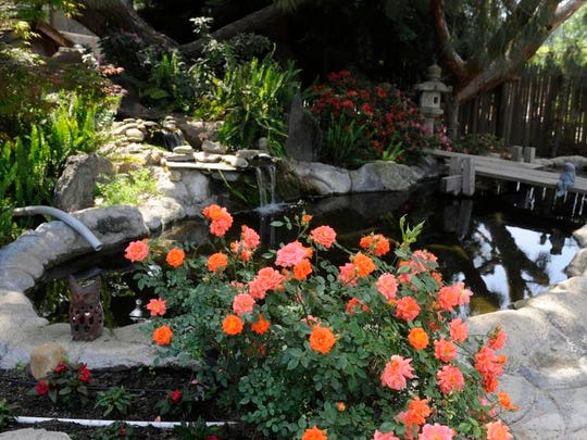 Roses bloom beside a Koi pond at Mimi Hoffman's Tulare home. Her gardens will be part of the Valley Oak Garden Club Garden Tour April 26.