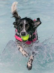 Dahlia has her ball and makes her way to the side of the pool at Puppy Plunge at Boro Beach.