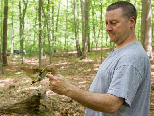 Delaware State associate professor Kitt Heckscher releases a veery after tagging it with a geolocator in White Clay Creek State Park on Monday morning.