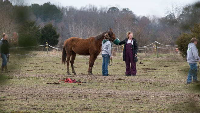 Two women feed a horse at a farm on Cherry Walk Road in Quantico on Monday, March 19, 2018.