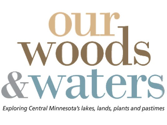 Our woods & waters