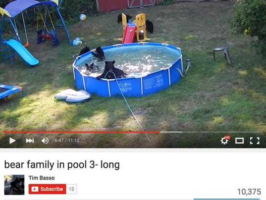 Bears beat the heat with swim in n j family s pool