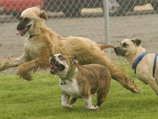 636166998478519331-Dog-park-photo.jpg