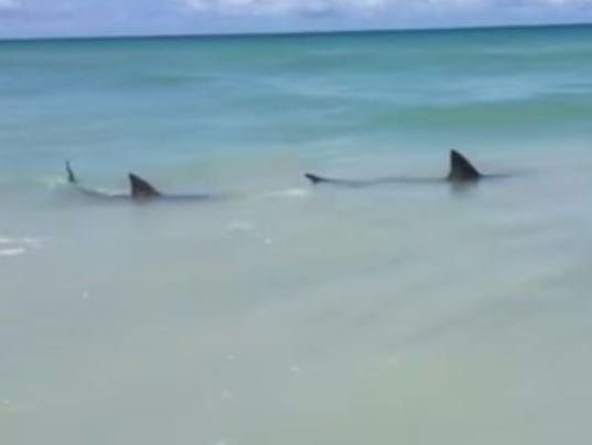 Some concerned shark fishing spurs attacks for Shark fishing from shore