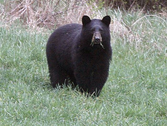 Smith board approves record number of bear permits for Wisconsin out of state fishing license