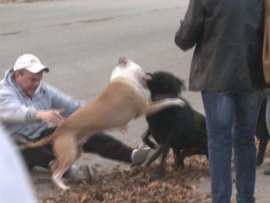 Dog Gets Tased