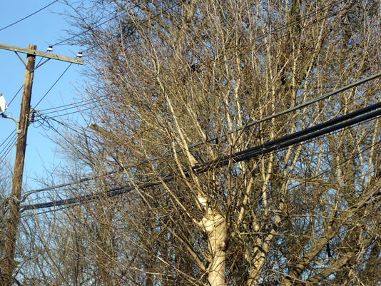 IMG_1_BHM_Tree_Trim.jpg_1_1_M1A8OD5N.jpg_20150324.jpg