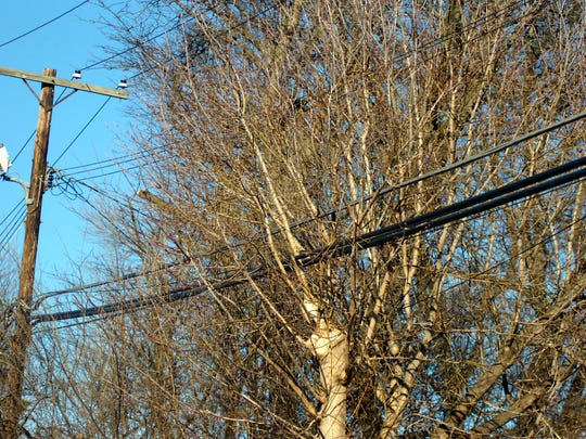 Some trees interfere with the DTE Energy power lines