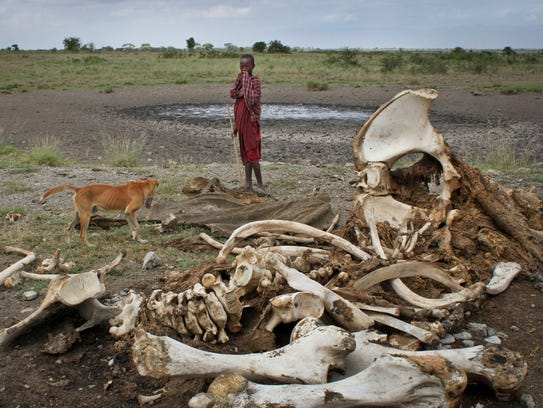 A Maasai boy and his dog stand near the skeleton of