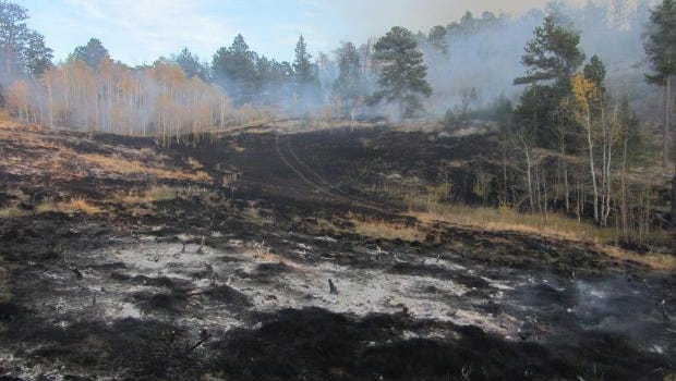 The goal of a prescribed burn near Pingree Hill in the Poudre Canyon is to remove hazardous fuel and improve the forest's health.