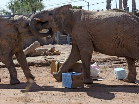 Tucson elephant Punga dies