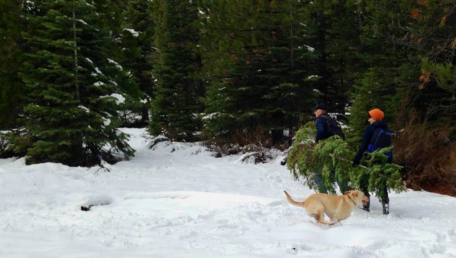 Outdoor time with family and friends is part of visiting a national forest to cut a Christmas tree.