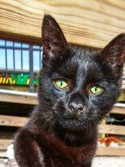 Shadow, one of the Seaside Heights boardwalk cats.