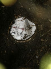 A water meter was buried in dirt, part of an aging
