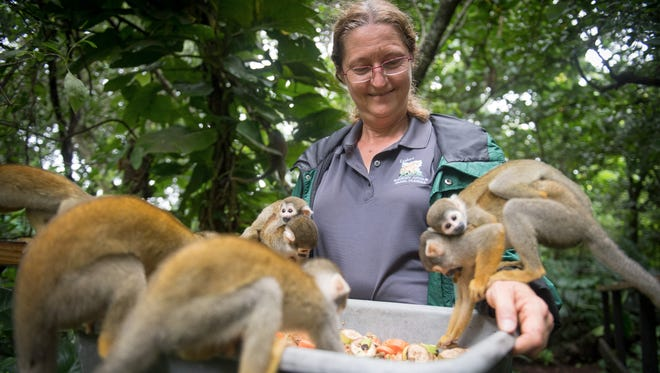 Sharon DuMond, president of Monkey Jungle, which was destroyed during Hurricane Andrew in 1992, feeds squirrel monkeys as she prepares for Hurricane Irma on Sept. 9, 2017.