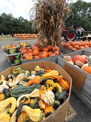 Boxes of gourds and pumpkins at Dr. Davies Farm Stand