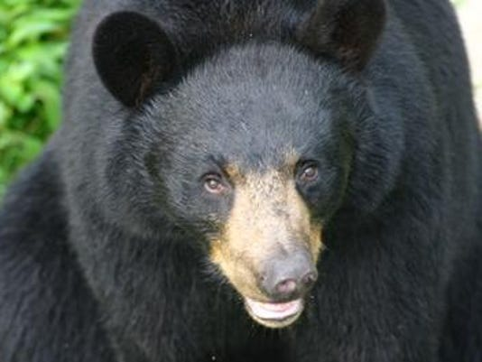 635793093016028018-black-bear