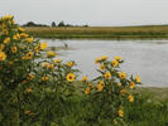 Iowa farmers will be looking to incorporate more conservation practices to improve water quality, with a new federal grant. Practices include wetlands, such as this one created as part of a pilot drainage project near Gilmore City. File photos taken Thursday, Aug. 27, 2015.