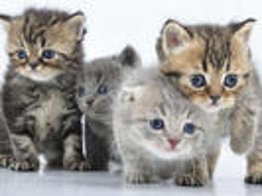 635833772612585815-kittens