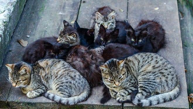 A group of stray cats