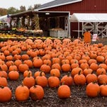 The owners of Farms View Roadstand say surveillance camera footage showed four people loading a dark-colored van with some 200 pumpkins from their patch.