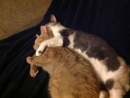 """Ellen Marble of Hopewell Township submitted this photo to the YDR Animals gallery Mar. 20. Marble writes, """"sibling love."""""""
