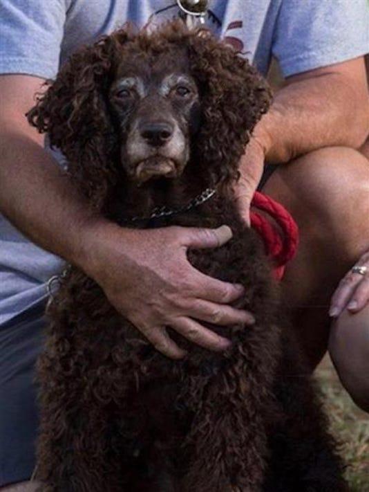 Lost dog Jessie