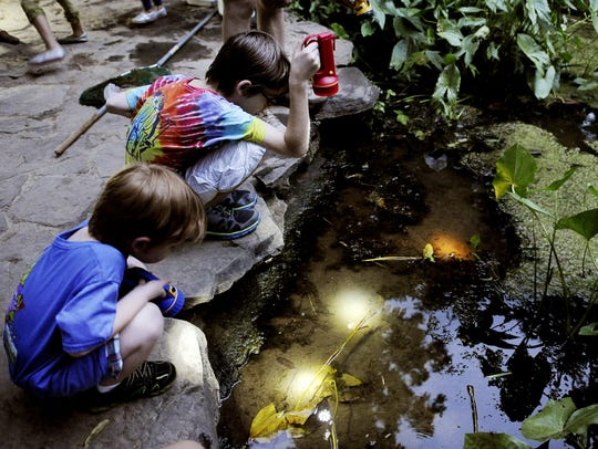 """The """"Insects of the Night""""  program at Warner Nature"""