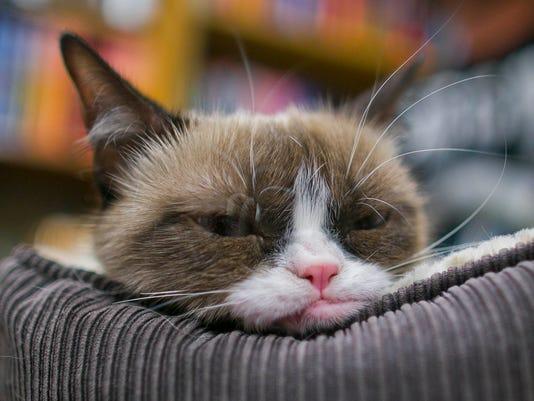 0921131200mm Grumpy Cat