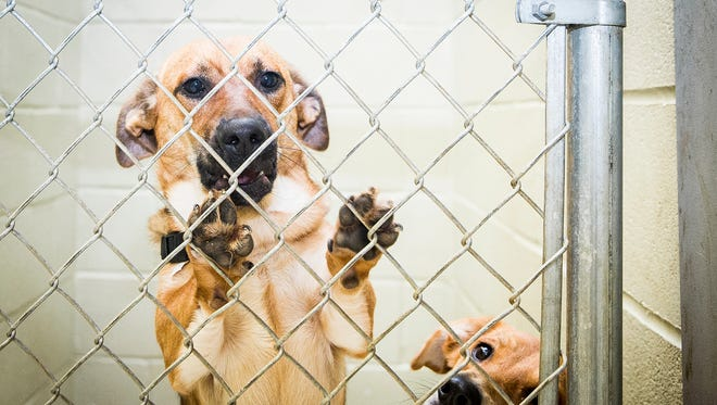 File photo of adoptable dogs at Muncie Animal Care and Services